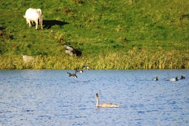 Carnboy Lake, Carrickfinn