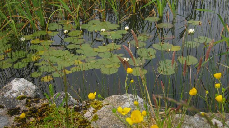 Carnboy Lake, Carrickfin